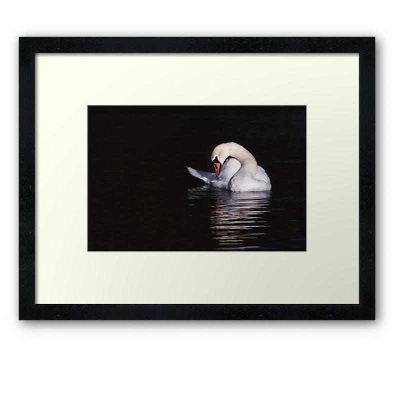 The Elegant Swan